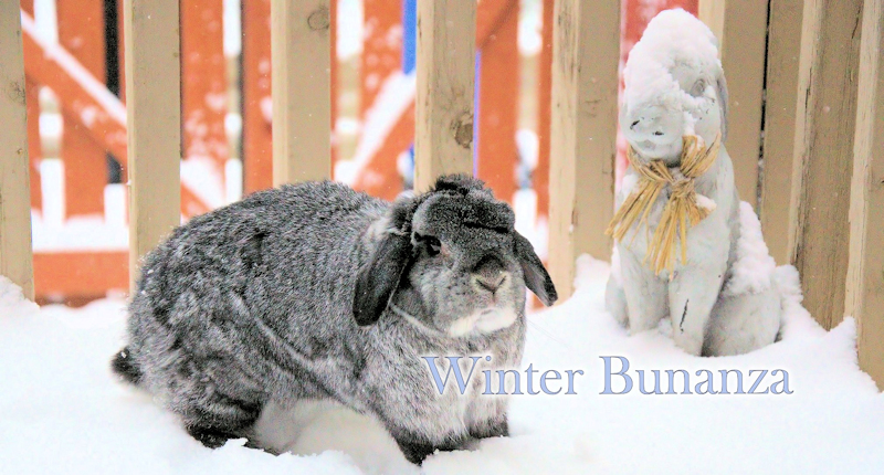 Winter Bunanza